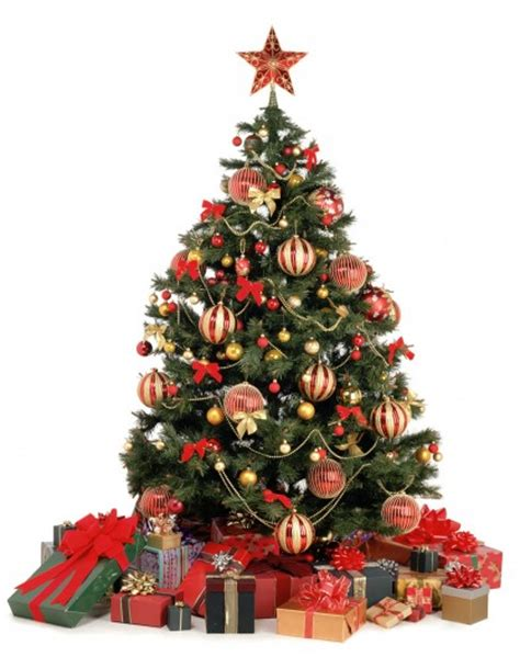 christmas trees origins and traditions in the world