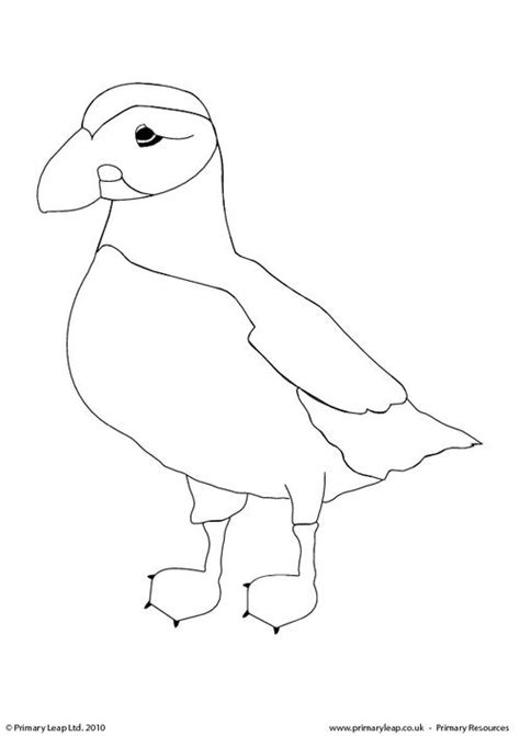 puffin bird coloring page puffin coloring pages