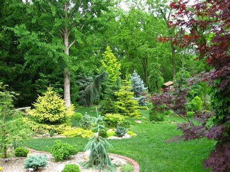 Conifer Garden Ideas 769 Best Images About Conifers On Cedrus Deodara Miniature And Pine