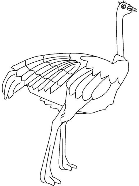 http www ahiva info colorear el arte de ense 241 ar colorear avestruz