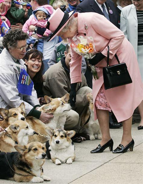 queen corgi happy birthday her majesty elisa motterle