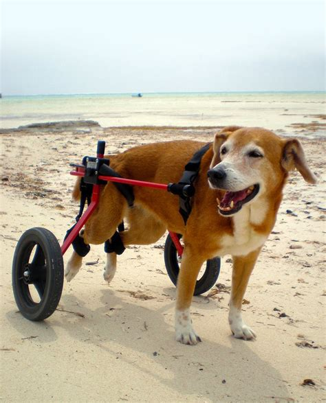 wheels for back legs cheap wheelchair for back legs chairs seating