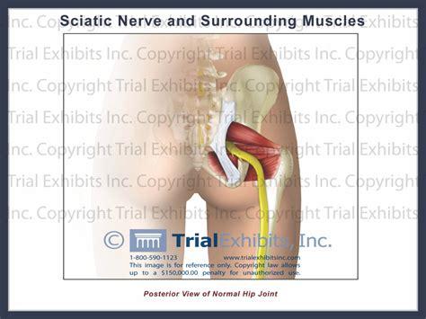 diagram of the sciatic nerve sciatic nerve anatomy diagram human anatomy diagram