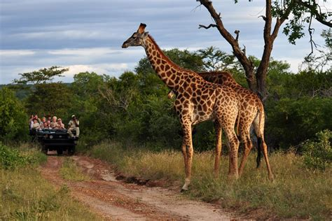 african safari 5 star african safari with unique zambezi queen river