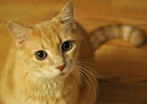 Why do cats stare at us cats breed