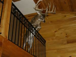 the coolest deer mount ever seen see photo gowally com