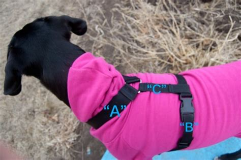 gopro harness for dogs diy tutorial using gopro