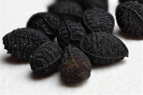 blackseed and hiv 2015 this ancient remedy cures all diseases diabetes cancer