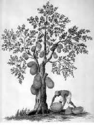 psikotest menggambar manusia dan pohon kompi