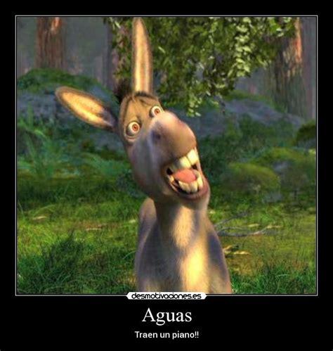 imagenes graciosos de burros burro shrek frases imagui