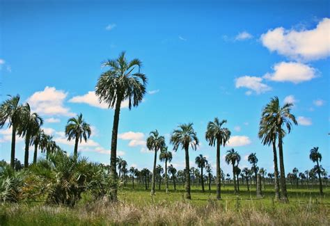 imagenes de paisajes uruguayos palmera buti 225 portal tur 237 stico de rocha uruguay