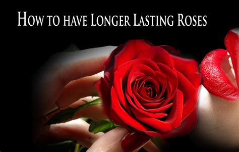 roses that last forever roses that last a year how to make roses last forever