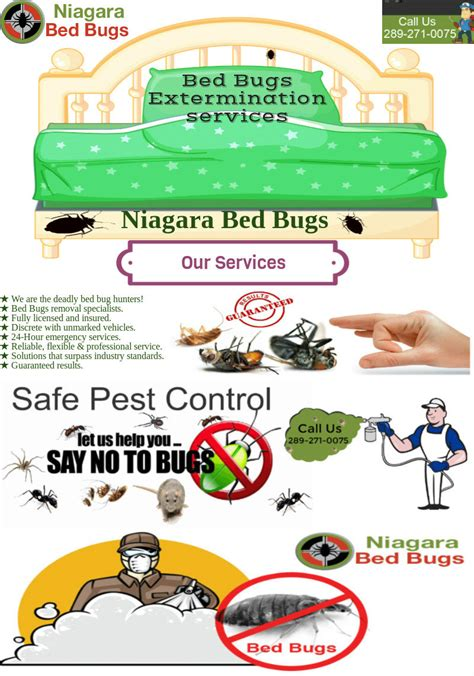 bed bugs heat treatment emergency bed bugs heat treatment extermination free