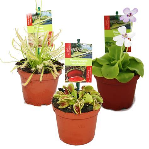 pflanzen shop starter set fleischfressende pflanzen 3 pflanzen ebay