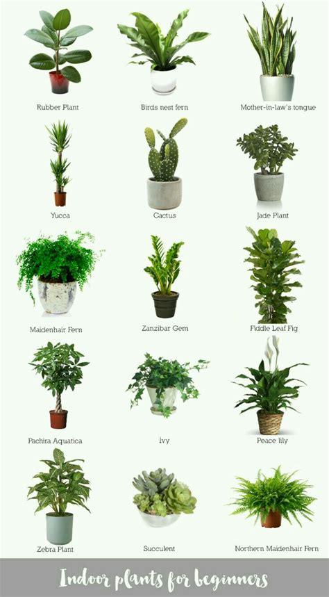 succulent types plants indoor plants  plants