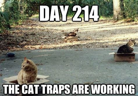 Cat Trap Meme - why memes may be serious business for your brand messages