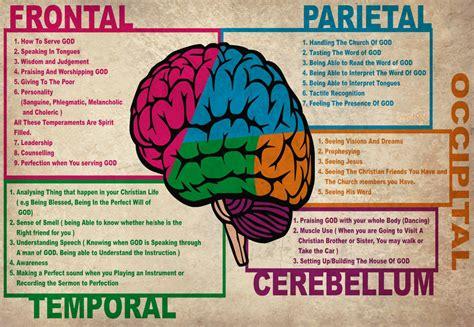 alimenti aiutano la crescita i 20 cibi per il benessere di cervello e sistema nervoso