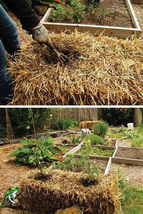 17 Best Images About Raised Beds Bales Of Straw On Using Straw In Vegetable Garden
