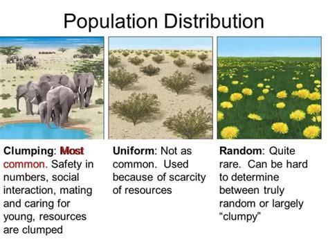 pattern distribution definition what is an exle of uniform distribution in