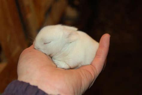 Harga Wadah Pakan Kelinci kelinci wong kito berawal dari kelinci berakhir dengan