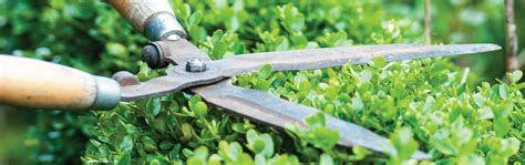 How To Sharpen Garden Shears by How To Sharpen Garden Shears How To Sharpen Clean Garden