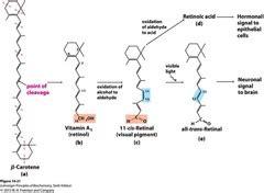 carbohydrates quizlet biochemistry biochemistry flashcards quizlet