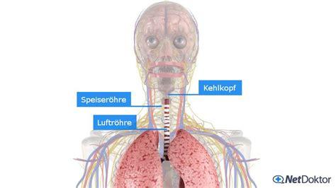 wann sind lymphknoten geschwollen halsschmerzen ursachen und m 246 gliche erkrankungen