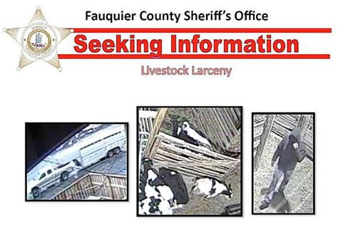 Fauquier County Sheriff S Office by Cattle Rustling Suspect Id D As From Southside Va