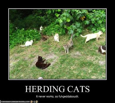 Herding Cats Meme - attitude and pepper spray october 2010
