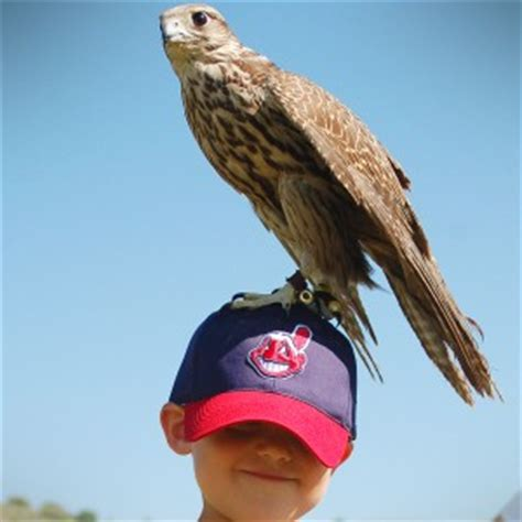 hire world birds of prey petting zoo in reno nevada