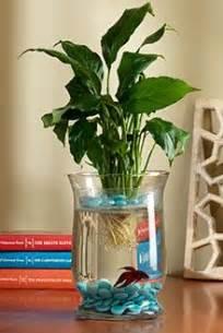best 25 vase fish tank ideas on betta fish