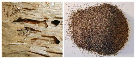 drywood termite inspection