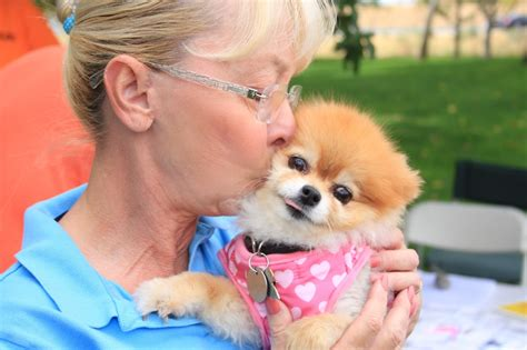 my pomeranian is limping wishes a happy foster s day to all foster mothers and fathers petmeds
