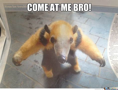 Anteater Meme - can you get through this post without laughing the animal