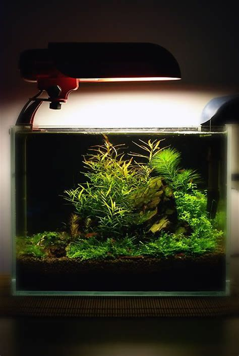 small aquarium aquascape 17 best images about cube and small aquascapes on