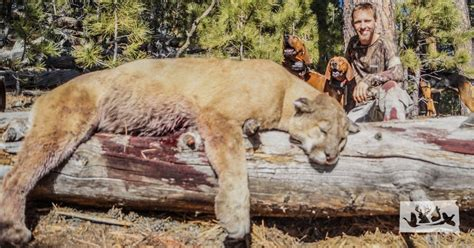 Home Plans One Story custer state park mountain lion article by christian mchugh