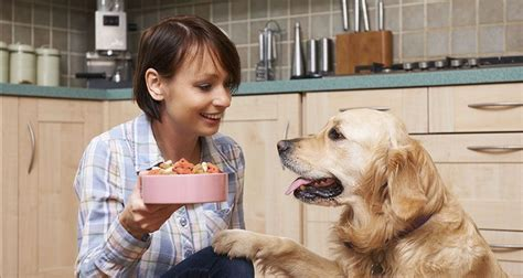 is feeding people food to pets ethical choosing the right dog food cesar s way