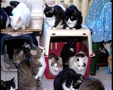 130 Cats Is Way Many by Itchmo News For Dogs Cats 187 Archive 187 Cares