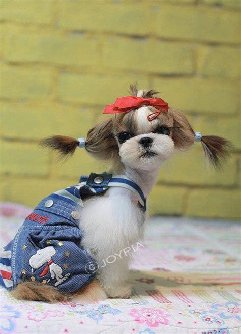 falling shih tzu 17 best images about shih tzu on pets puppys and grooming styles