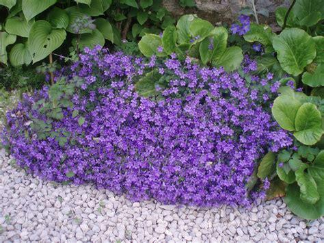 Fleur Violette by Petites Fleurs Violettes Fleurs Sauvages Violettes