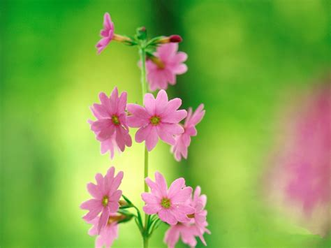 wallpaper green pink floral pink and green flower wallpaper 12 widescreen wallpaper