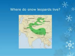 Where do snow leopards live 5 describe the animalsnow leopards