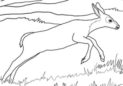 running deer coloring page pinterest the world s catalog of ideas