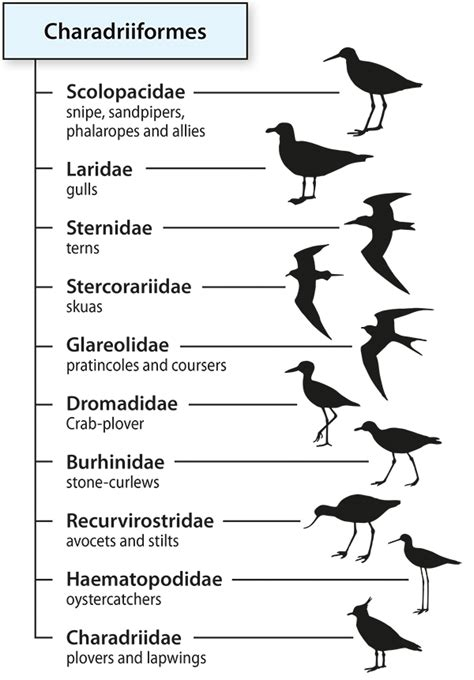naming birds bird taxonomy and identification