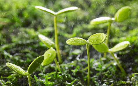 high definition photo of plants wallpaper of seeds