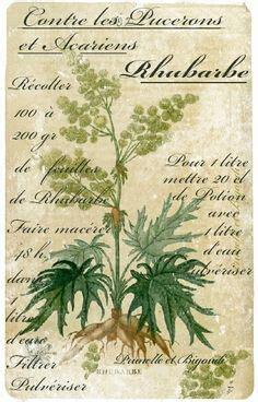 Deco Maison A Faire Soi Meme 1337 by Les Herbes Aromatiques Et Condiments Au Moyen Age Les
