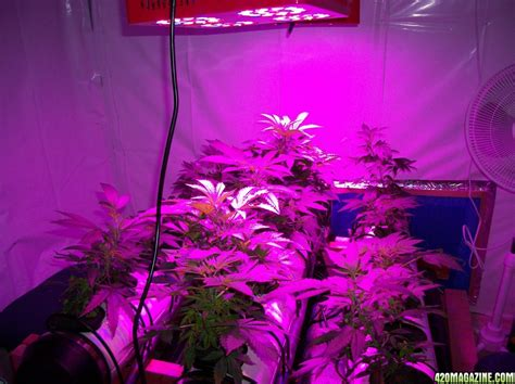 lade a led per coltivazione lade a led per grow room lade a led per grow room lade a