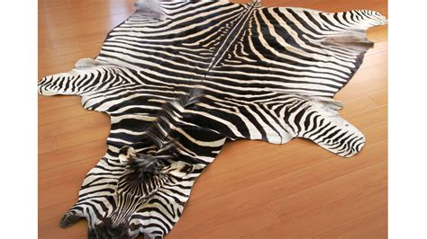 Real Zebra Rug by Real Zebra Skin Zebra