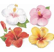 Beautiful Flowers Vector 04  Flower Free Download