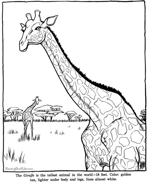 coloring page zoo animals free zoo animals coloring pages for preschoolers coloring pages